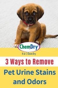 3 Ways to Remove Pet Urine Stains and Odors
