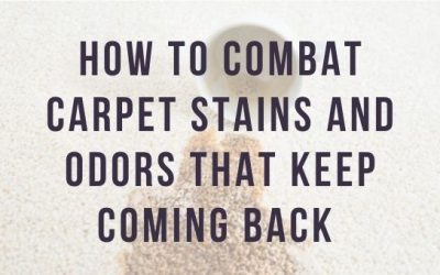 How to Combat Carpet Stains and Odors that Keep Coming Back