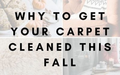 Why to Get Your Carpet Cleaned this Fall